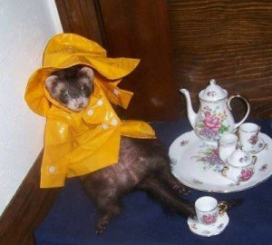 Ferret-Tea-party